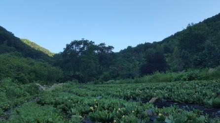 [8-6]평창청옥산농장 (해발800m)