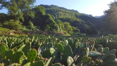 [8-7]평창청옥산농장 (해발 850m)