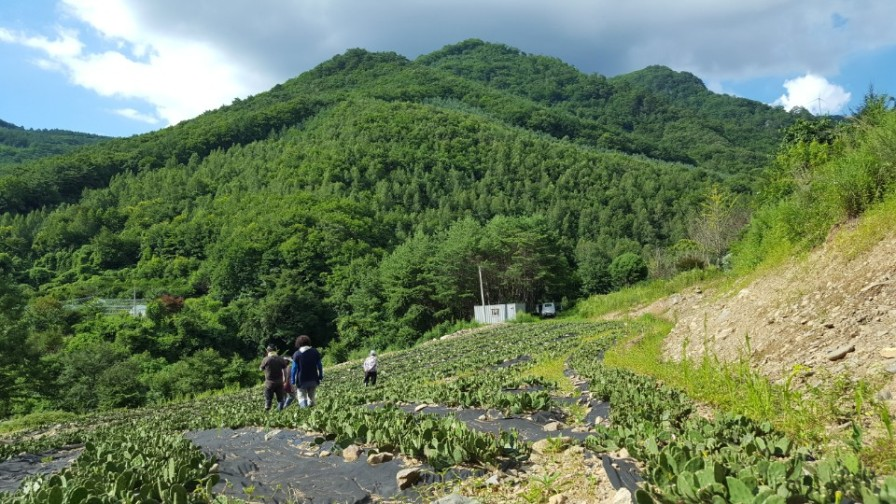 [8-8]평창청옥산농장 (해발900m)